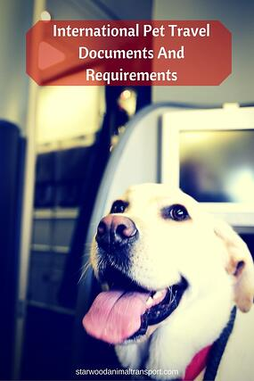 International Pet Travel Documents And Requirements http://www.starwoodanimaltransport.com/blog/international-pet-travel-documents-and-requirements @starwoodpetmove