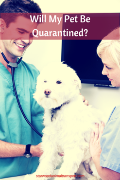 Will My Pet Be Quarantined During A Move To The USA http://www.starwoodanimaltransport.com/blog/will-my-pet-be-quarantined-during-a-move-from-usa @starwoodpetmove