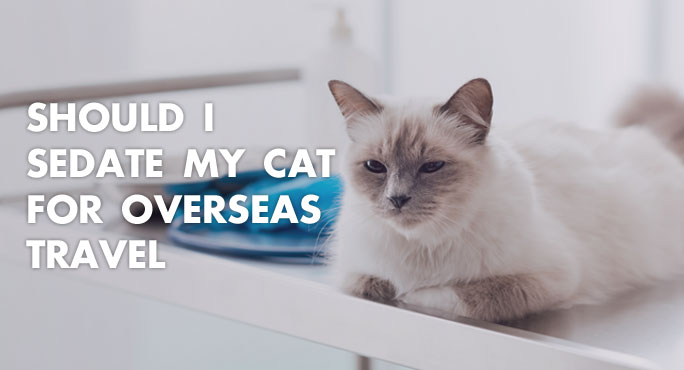 Should I Sedate My Cat For Overseas Travel