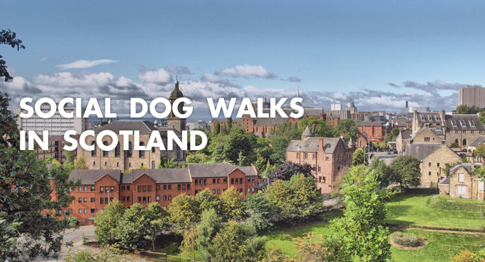 aerial view of Scottish town perfect for social dog walks