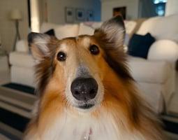Spain Dog