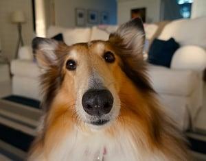 Dog ready for international travel