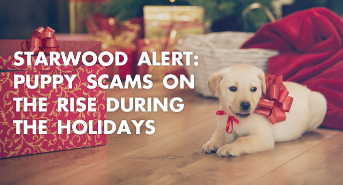 cute puppy with a red ribbon directly bought from a shelter to avoid the increasing puppy scam online during holidays