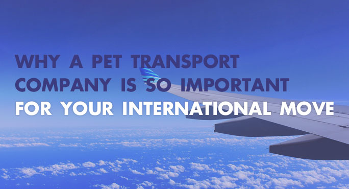 Why A Pet Transport Company is Important for an International Move