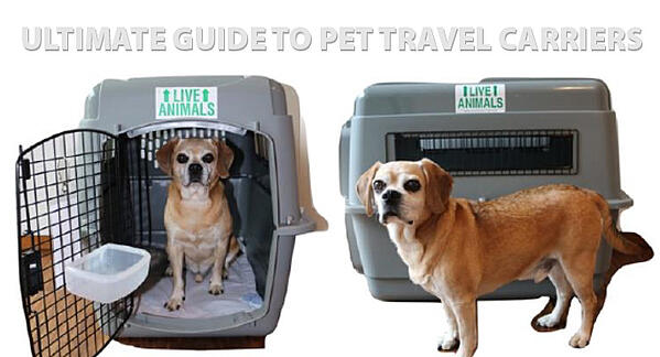 dog-next-to-pet-travel-carrier