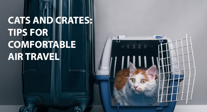 Kitty in a crate ready for air travel
