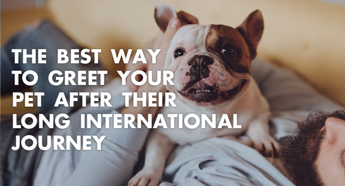 The Best Way to Greet Your Pet After Their Long International Journey https://www.starwoodanimaltransport.com/blog/best-way-greet-pet-after-long-international-journey