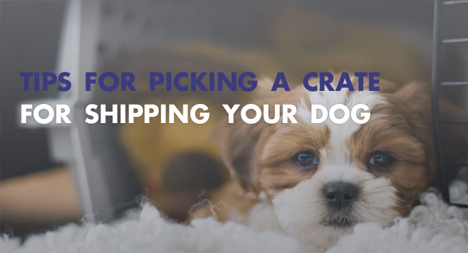 How to Pick A Proper Crate for Shipping Your Dog