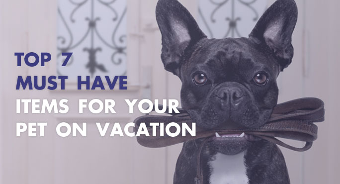 The top 7 must have items for your pet on a vacation
