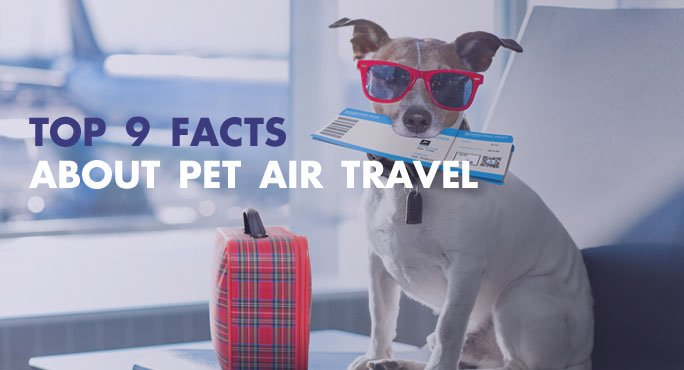 Top-9-Facts-About-Pet-Air-Travel.jpg