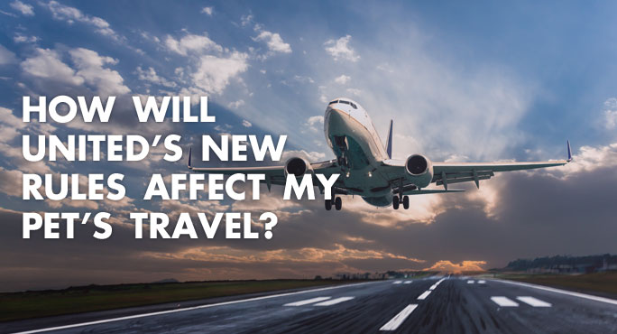 How Will United's New Rules Affect My Pet's Travel? https://www.starwoodanimaltransport.com/blog/how-will-uniteds-new-rules-affect-my-pets-travel