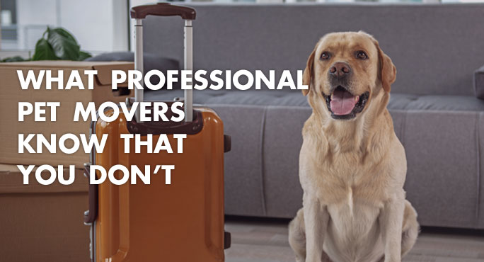 What Professional Pet Movers Know That You Don't https://www.starwoodanimaltransport.com/professional-pet-movers-know-that-you-dont