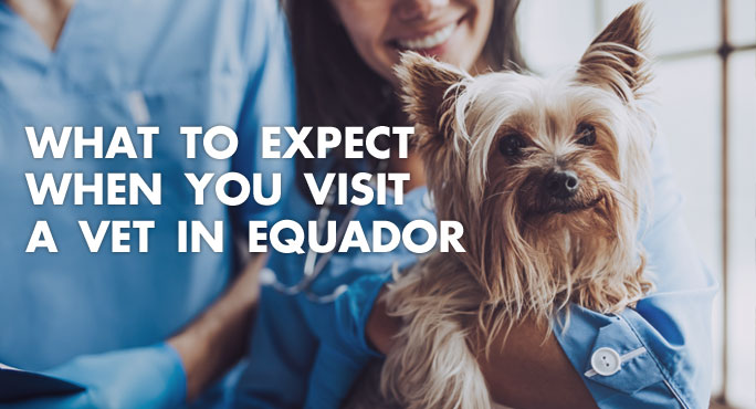 What to Expect When You Visit A Vet in Ecuador https://www.starwoodanimaltransport.com/blog/what-to-expect-when-you-visit-a-vet-in-equador