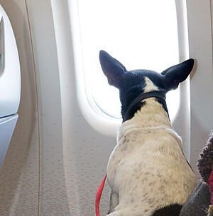 What-To-Look-For-In-Airlines-Pet-Policy-Blog3