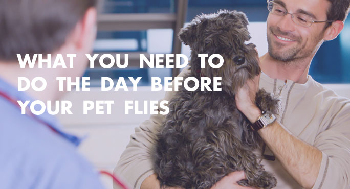 What You Need to Do the Day Before Your Pet Flies http://www.starwoodanimaltransport.com/blog/things-to-do-before-your-pet-flies