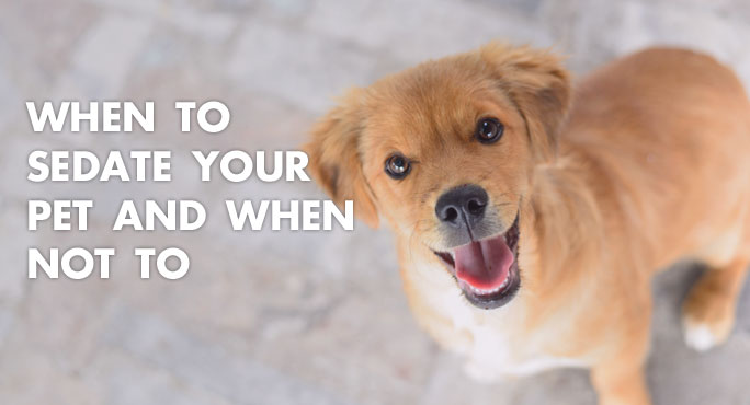 When to Sedate Your Pet and When Not To http://www.starwoodanimaltransport.com/when-to-sedate-your-pet-and-when-not-to
