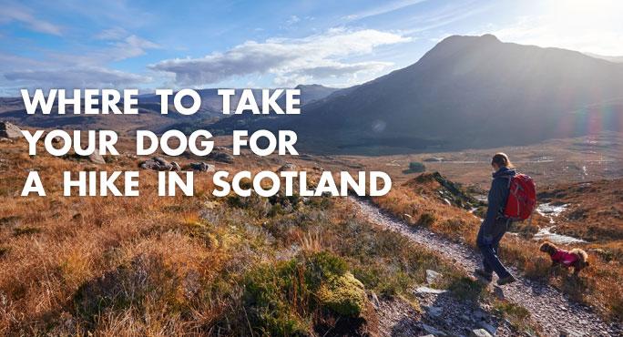 Where-To-Take-Dog-Hike-Scotland-Blog