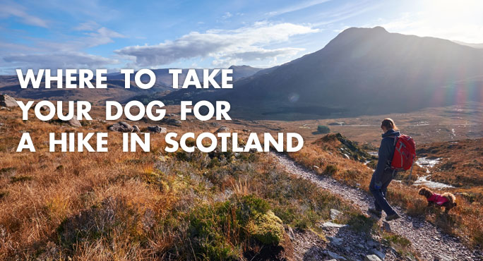 Where-To-Take-Dog-Hike-Scotland-Blog