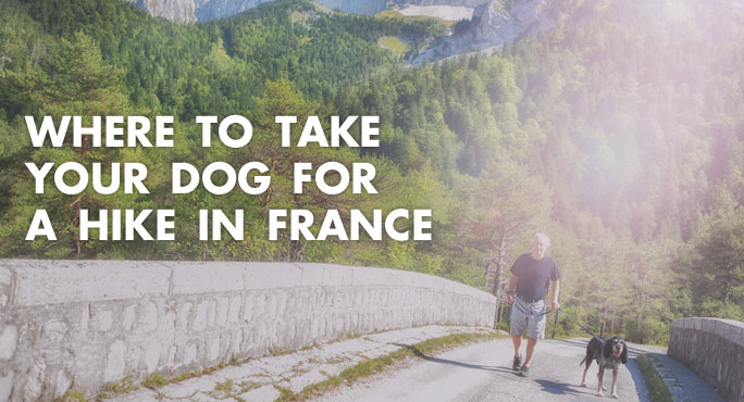 Where to Take Your Dog For A Hike in France https://www.starwoodanimaltransport.com/where-to-take-your-dog-for-a-hike-in-france