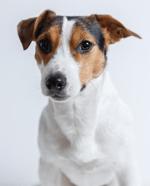 dog moving to belgium