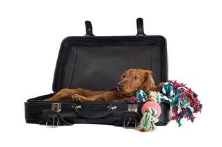 flying with a dog and their luggage