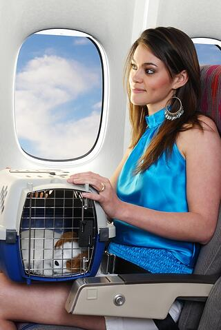 flying with a cat on an airplane