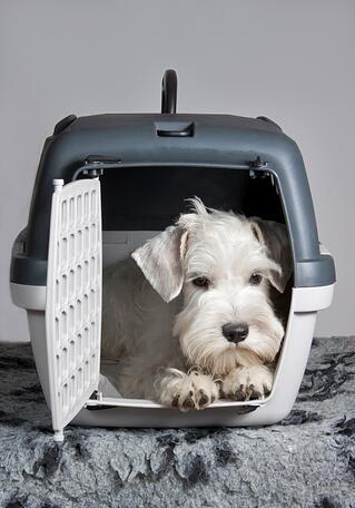 dog in IATA-approved kennel about to fly
