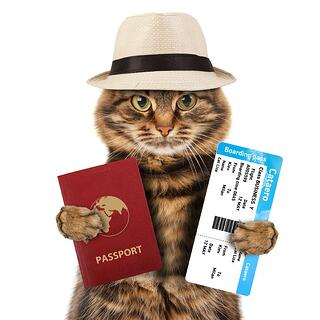 Flying with a cat with the right documentation