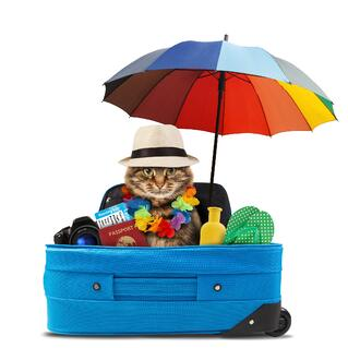 flying with a cat and their luggage