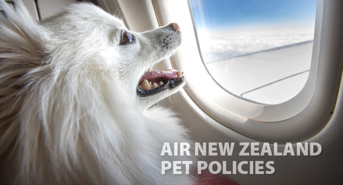 white chow dog in airplane seat looking out the window