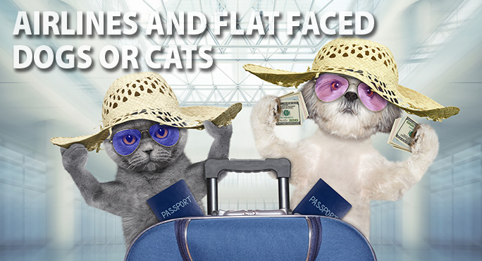 starwood-flat-faced-airlines-blog