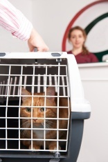 Questions to ask when moving your pet.