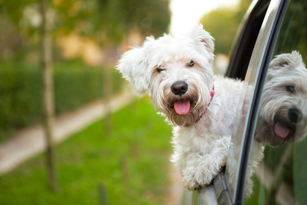 wherever-life-takes-you-dog-image.jpg