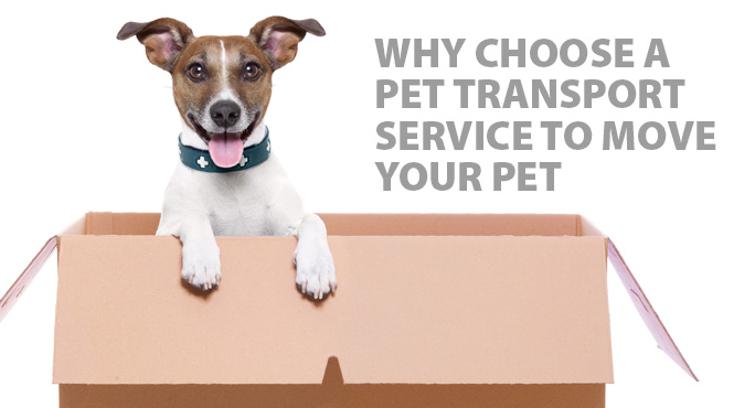 why-choose-pet-transport-blog