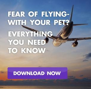 Flying with your Pet