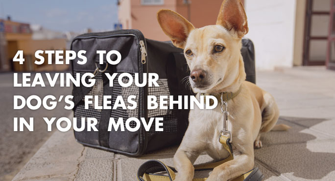 4 Steps To Leaving Your Dog S Fleas Behind In Your Move
