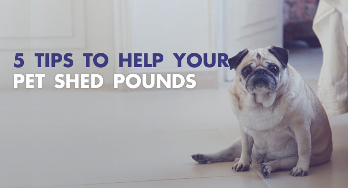 5 Tips to Help Your Pet Shed Pounds