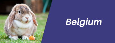 Belgium Pet Transport