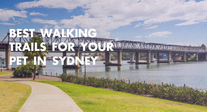 Best Walking Trails for Your Pet In Sydney