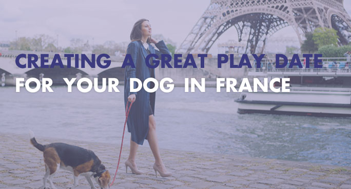 Creating-A-Great-Play-Date-For-Your-Dog-in-France.jpg