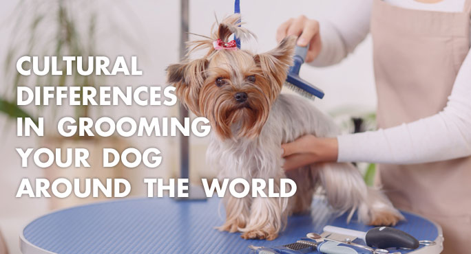 Cultural Differences In Grooming Your Dog Around The World