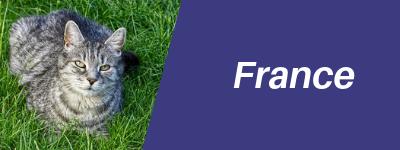 France Pet Transport