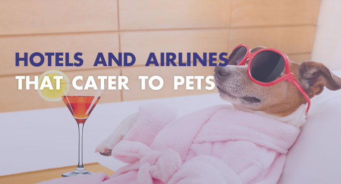 Hotels-And-Airlines-That-Cater-To-Pets-Blog.jpg