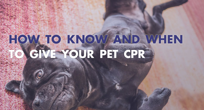 How to Know and When to Give Your Pet CPR