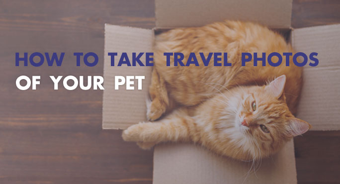 How to Take Travel Photos of Your Pet