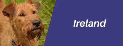 Ireland-pet-relocation-button