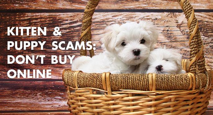 Kitten-Puppy-Scams-Blog.jpg