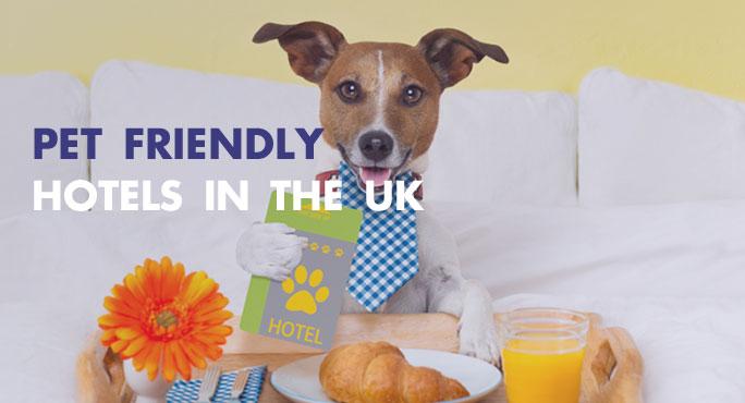 Pet-Friendly-Hotels-In-The-UK-Blog.jpg