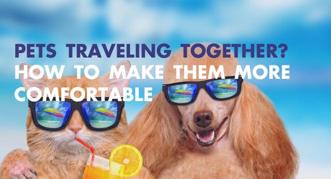 Pets-Traveling-Together-Blog.jpg