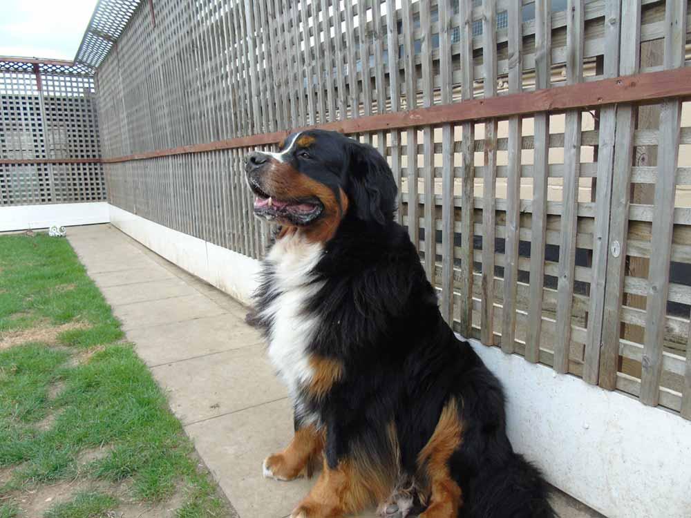 dog-outside-next-to-fence